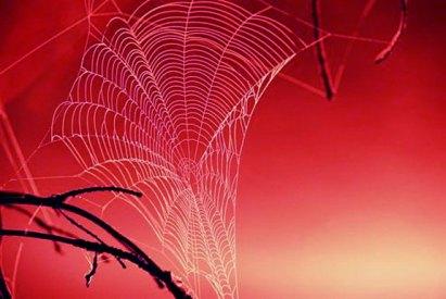 tangled_web_1.jpg